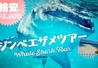 【格安ジンベイザメツアー!3900㌷】日本人同行で安心!マクタン・セブ島送迎無料