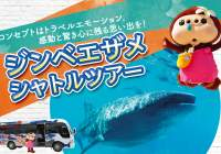 《特典付》ジンベエザメに会いに行こう!海も滝も楽しめる「ジンベエザメツアー」!