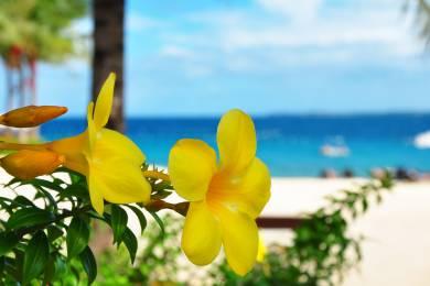 【zoomバーチャル背景対応】セブ島(CEBU Island)花とビーチ